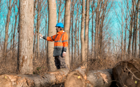 Forstwirt bereitet Holzernte vor.